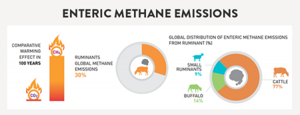 Enteric methane emissions