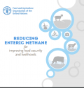 Reducing Enteric Methane for Improving Food Security and Livelihoods