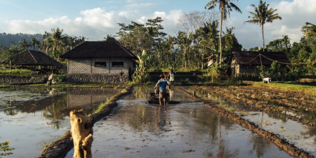 Making Climate Finance Work in Agriculture