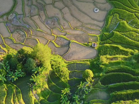 Aerial view of crops, Indonesia. Photo by Ibadah Mimpi from Pexels