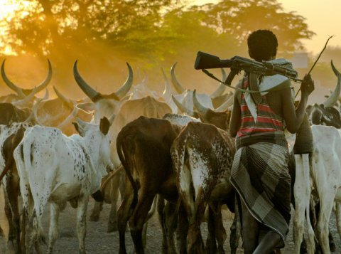Afar tribesman with his cattle, Afar region, Ethiopia. Photo: Eric Lafforgue