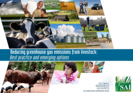 Reducing greenhouse gas emissions from livestock: Best practice and emerging options
