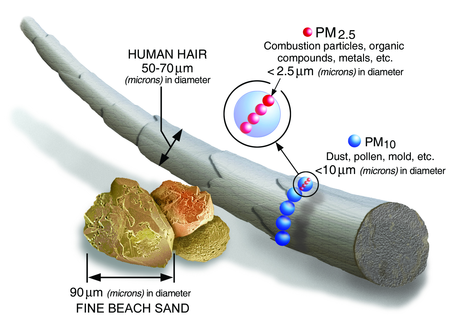 Relative size of particulate matter